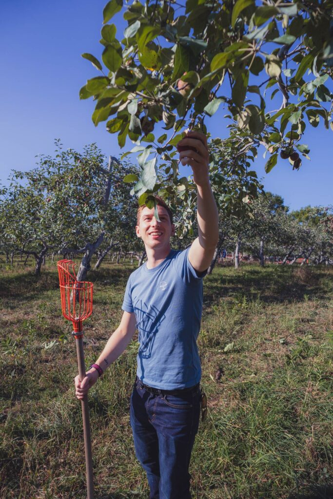 picking apples in an orchard